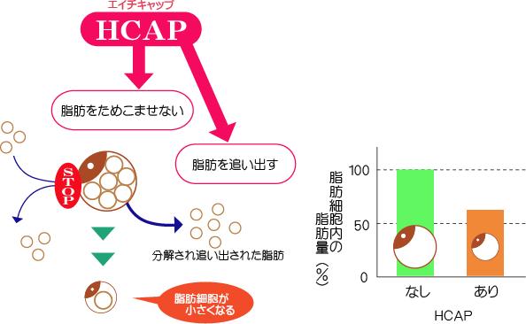スラリステム エッセンス HCAP